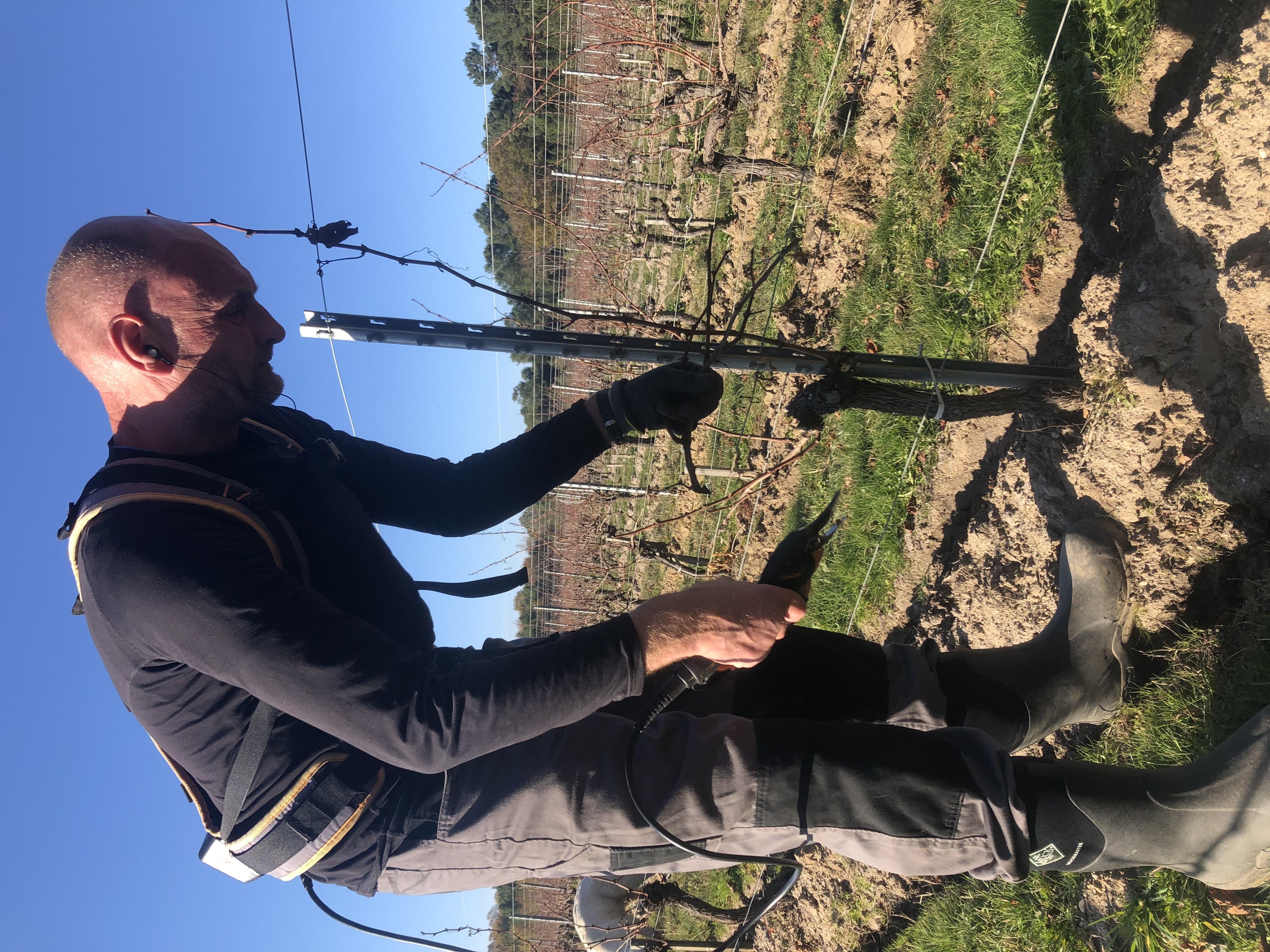 Démarrage de la taille du vignoble à CHATEAU BALAC